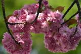 spring001.jpg