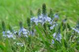 spring110.jpg