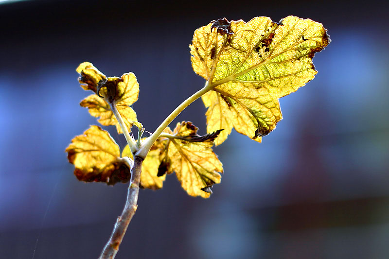 Autumn 2 (*)