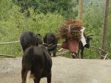 1038 Inebolu walk misty day 2003 09 15