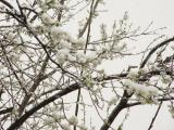 Bursa walk in snow