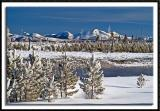 Yellowstone's Winter Wonderland