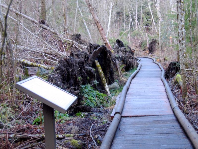 Swamp Trail is open!