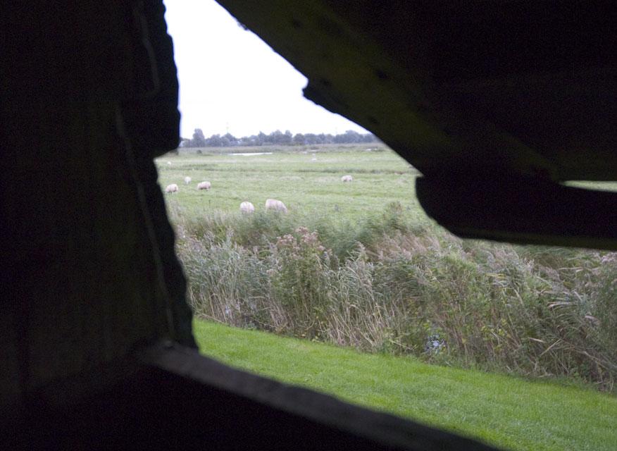 View from Molen Bestand #1