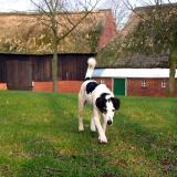 Joop's Dog Log - Monday Apr 26