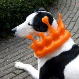 Joop's Dog Log - Friday Apr 30