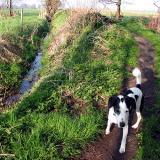 Joop's Dog Log - Saturday May 01