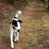 Joop's Dog Log - Tuesday May 04