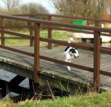 Joop's Dog Log - Wednesday May 05
