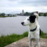 Joop's Dog Log - Monday May 10