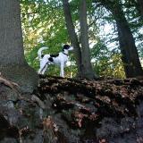 Joop's Dog Log - Wednesday September 29