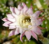 IMG_5904flowers.jpg