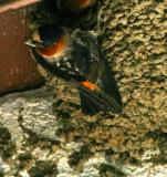 IMG_5836 birds.jpg