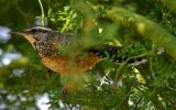 IMG_5865 birds.jpg