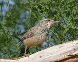 IMG_5868 birds.jpg