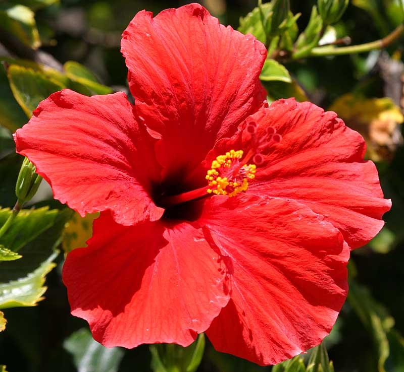IMG_5930flowers.jpg