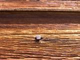 Detail of wood and nail [D]