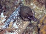 Unidentified Moray Eel
