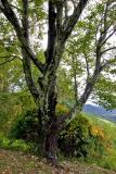 Tree on Blue Ridge Parkway