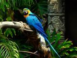 blue macaw.jpg