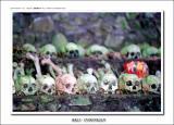 skull @ Trunyan