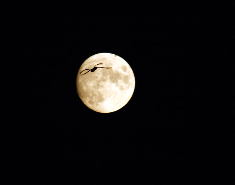 moon and cranes