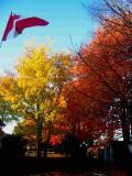 Autumn Leaves - Moncton, New Brunswick