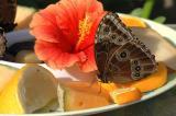papillon_sur_fruit.jpg