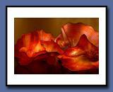 36-Red-Lichens-copy.jpg
