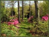 genesis_garden
