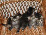 All kittens, but some are leaving the picture -   Koko porukka, mutta osa haluaa pois kuvasta