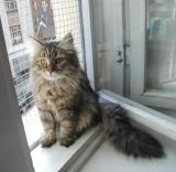 Enjoying Mother's Day's nice weather on the window sill.