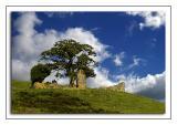 Hill-top ruin