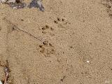 Footprints in the sand.jpg(498)