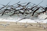 1st: Lotsa Birds by Bruce Jones