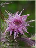 cactusflower1.jpg