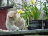 sharons_spring_04
