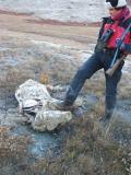 Rinie Kicks Carcass