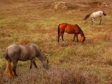 The Horses ... 01