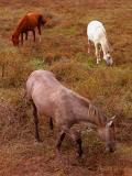 The Horses ... 03