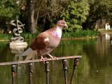City Park of Caldas da rainha ... 02