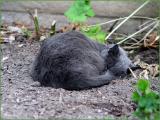 Sleeping Cat!