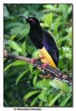 12-Wired Bird of Paradise