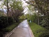 Promenade plantée 2004-04-19
