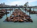 0407 sea lions.jpg