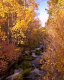 3451-Creekside-color.jpg