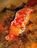 Bright Nudie - Four Mile Reef