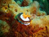 Nudie Branch - Four Mile Reef