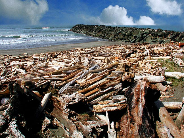 Driftwood At The South Jetty