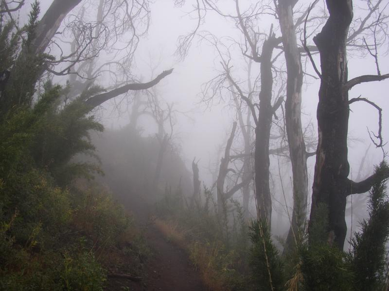Bariloche Trail.JPG